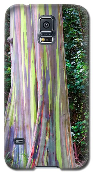 Rainbow Eucalyptus 3 Galaxy S5 Case