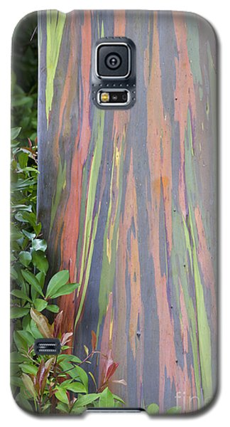 Galaxy S5 Case featuring the photograph Rainbow Eucalyptus by Bryan Keil