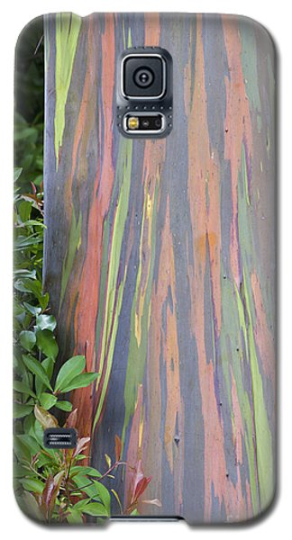 Rainbow Eucalyptus Galaxy S5 Case by Bryan Keil