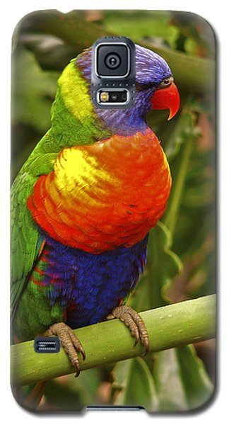 Rainbow Lorikeet.  Galaxy S5 Case