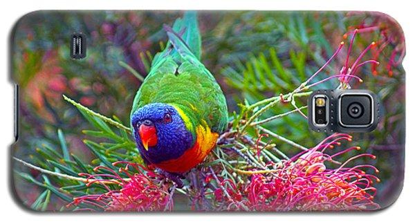 Rainbow Lorikeet I Galaxy S5 Case by Cassandra Buckley