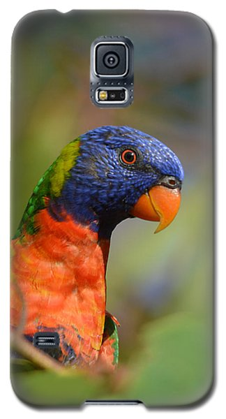Rainbow Lorikeet Parrot  Galaxy S5 Case