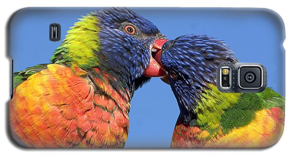 Rainbow Lorikeets Galaxy S5 Case