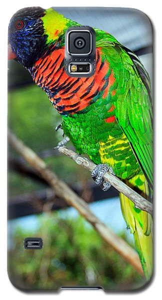 Galaxy S5 Case featuring the photograph Rainbow Lory by Sennie Pierson