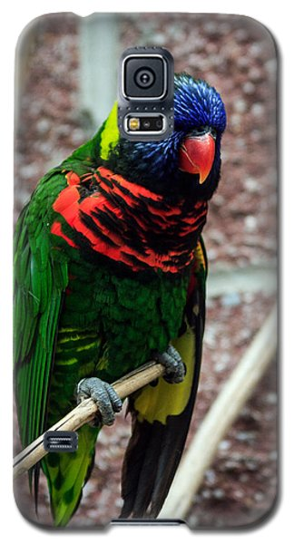 Galaxy S5 Case featuring the photograph Rainbow Lory Too by Sennie Pierson