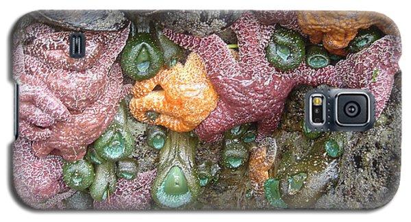 Rainbow Of Sea Creatures Galaxy S5 Case by Karen Molenaar Terrell