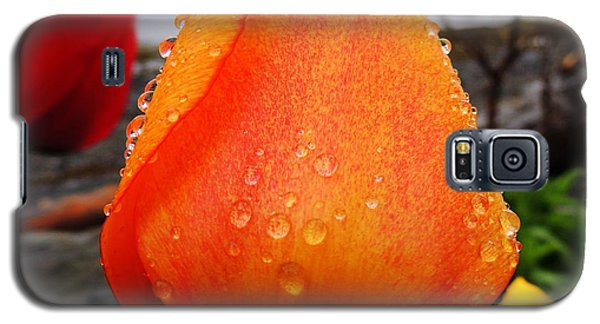 Raindrop Tulip Galaxy S5 Case by Karen Horn