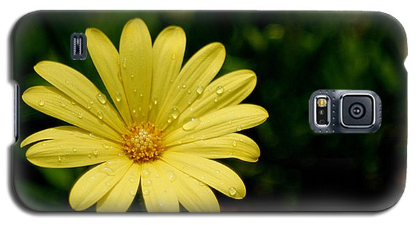Raindrops And Daisy Galaxy S5 Case by Living Color Photography Lorraine Lynch