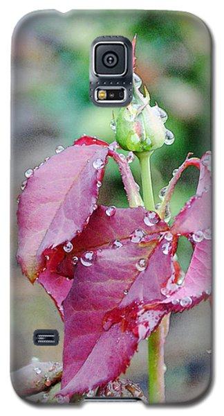 Raindrops And Rosebud 1 Galaxy S5 Case