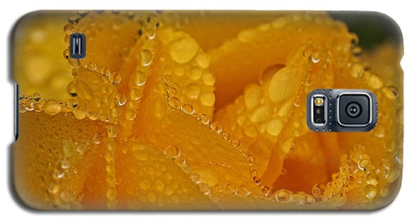 Galaxy S5 Case featuring the photograph Raindrops On Yellow Rose by Inge Riis McDonald