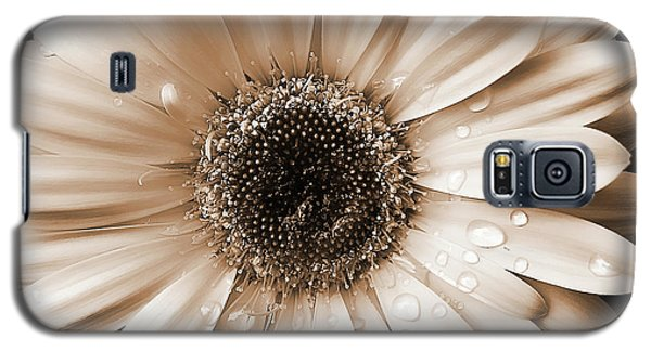 Raindrops On Gerber Daisy Sepia Galaxy S5 Case