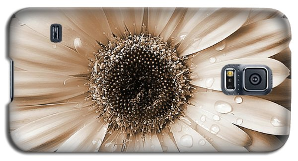 Raindrops On Gerber Daisy Sepia Galaxy S5 Case by Jennie Marie Schell