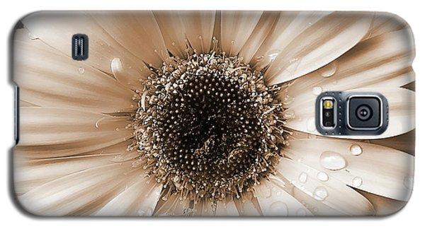 Raindrops On Gerber Daisy Sepia Galaxy S5 Case