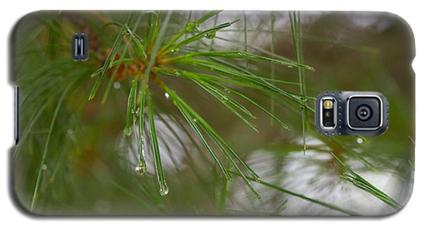 Rainy Day Pines Galaxy S5 Case by Haren Images- Kriss Haren