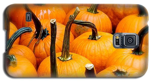 Galaxy S5 Case featuring the photograph Rainy Day Pumpkins by Ira Shander