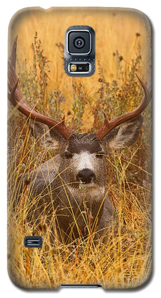 Galaxy S5 Case featuring the photograph Rainy Mountain Buck by Aaron Whittemore