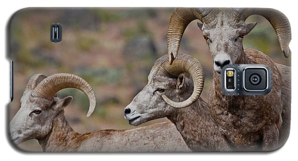Rams In Three Galaxy S5 Case by Athena Mckinzie