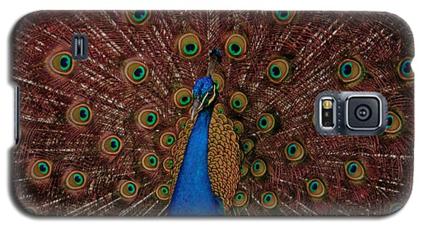 Galaxy S5 Case featuring the photograph Rare Pink Tail Peacock by Eti Reid