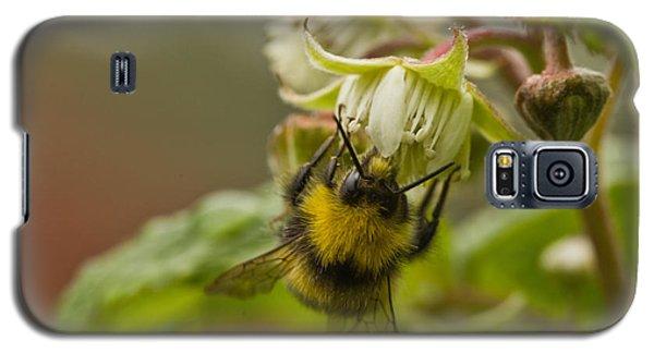 Raspberries And Honey Galaxy S5 Case by Liz  Alderdice