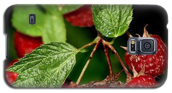 Raspberries Galaxy S5 Case by Nikolyn McDonald