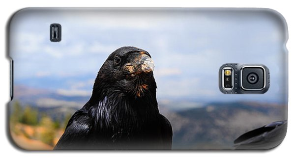 Raven Portrait Galaxy S5 Case by Donald Fink