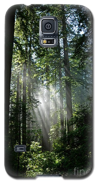 Rays In Redwoods Galaxy S5 Case