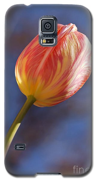 Reach For The Sky Galaxy S5 Case by Dee Cresswell