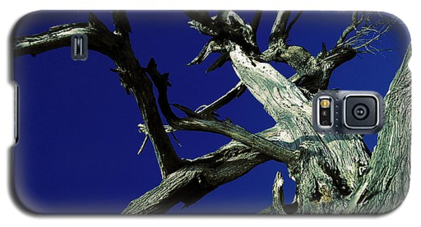 Galaxy S5 Case featuring the photograph Reach For The Sky by Janice Westerberg