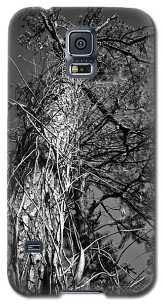 Galaxy S5 Case featuring the photograph Reaching To The Sky by Greg Jackson