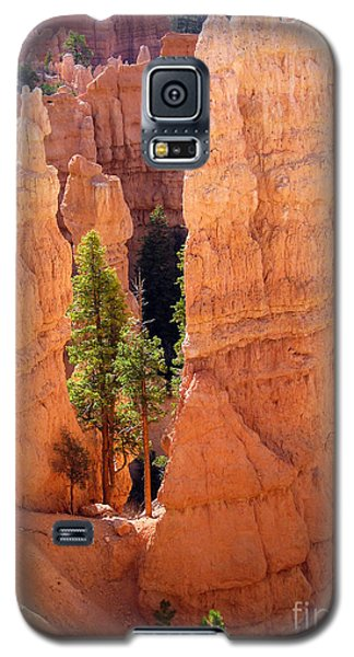 Reaching Towards The Sun Galaxy S5 Case