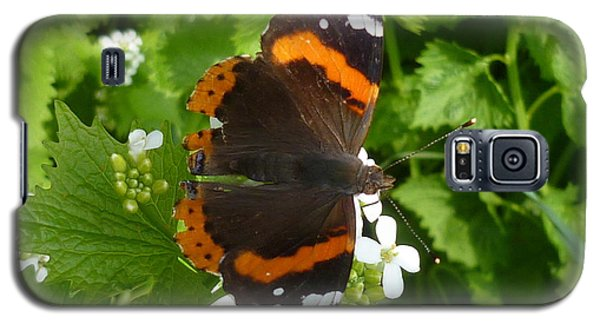 Galaxy S5 Case featuring the photograph Red Admiral In Toronto by Lingfai Leung