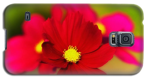 Galaxy S5 Case featuring the photograph Red And Pink Aster Flowers by Nick  Biemans