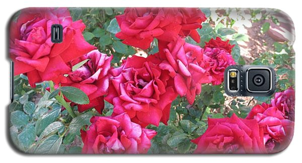 Galaxy S5 Case featuring the photograph Red And Pink Roses by Chrisann Ellis
