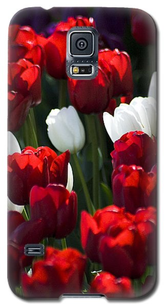 Galaxy S5 Case featuring the photograph Red And White Tulips by Yulia Kazansky