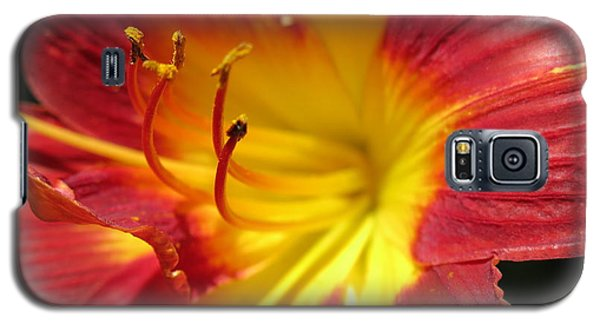Red And Yellow Day Lily Galaxy S5 Case