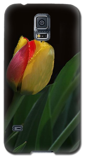 Red And Yellow Fringe Tulip Galaxy S5 Case by Bill Woodstock