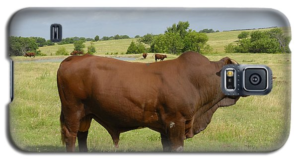 Red Angus Bull Galaxy S5 Case