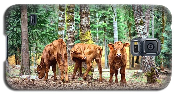 Red Angus Calves Galaxy S5 Case by Larry Campbell
