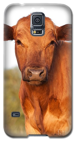 Red Angus Cow Galaxy S5 Case