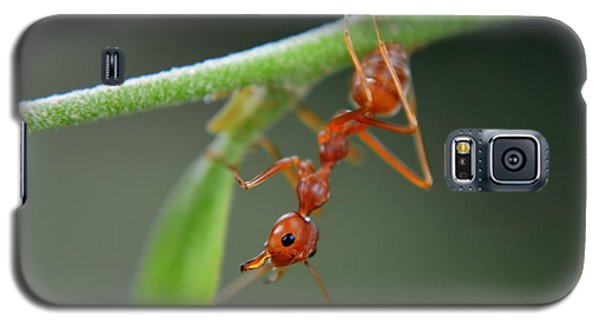 Red Ant Galaxy S5 Case by Michelle Meenawong