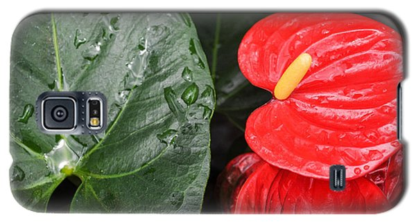 Red Anthurium Flower Galaxy S5 Case