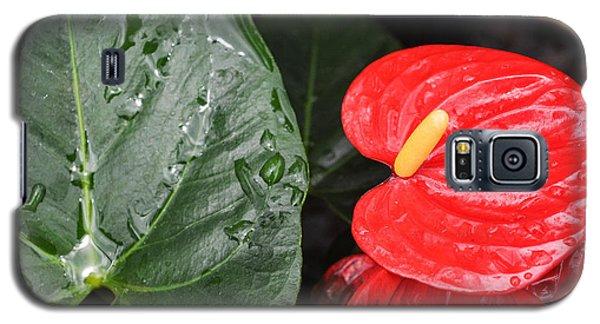 Red Anthurium Flower Galaxy S5 Case