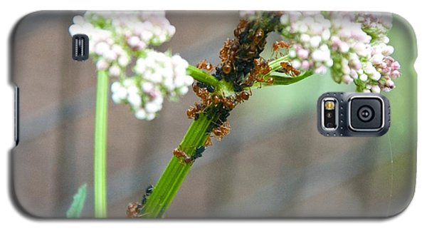 Red Ants And Valerian Officinalis Galaxy S5 Case