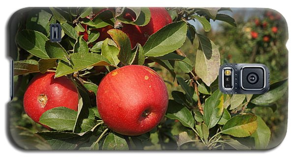 Red Apple Growing On Tree Galaxy S5 Case