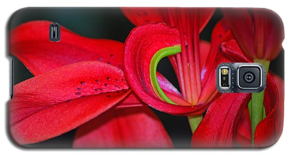 Red Asiatic Lily Galaxy S5 Case