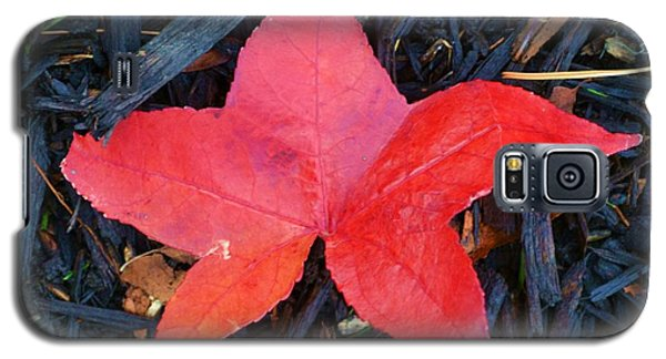 Red Autumn Leaf Galaxy S5 Case by P Dwain Morris