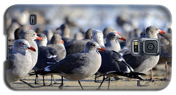 Red Beak Seagull Convention Galaxy S5 Case by Alex King