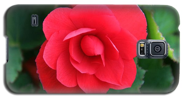 Galaxy S5 Case featuring the photograph Red Begonia by Sergey Lukashin