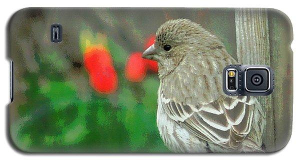 Red Behind Little Beak Galaxy S5 Case by Heidi Manly