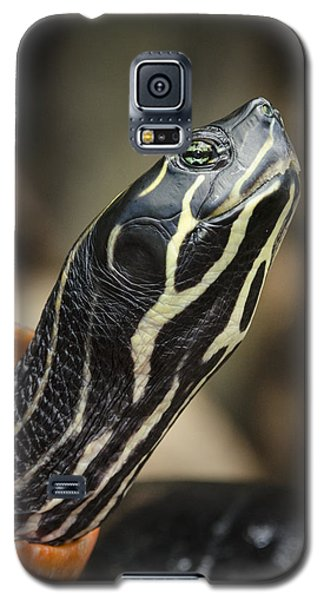 Red Bellied Cooter Galaxy S5 Case